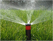 Welcome To Dolphin Irrigation Systems